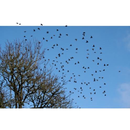 birds,photography,edit